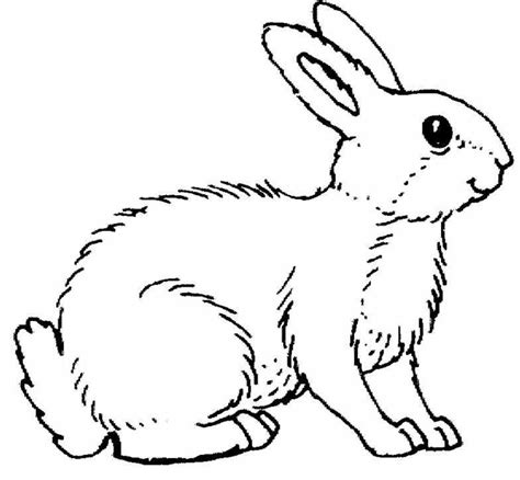 Printable Rabbit Coloring Pages Coloring Me Rabbit Color Pages
