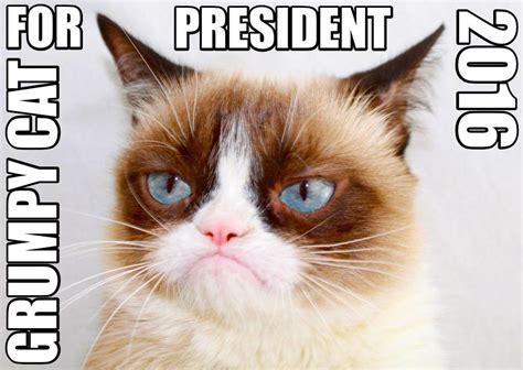 grumpy cat for president 2016 grumpy cat for president 2016 grumpy cat your meme