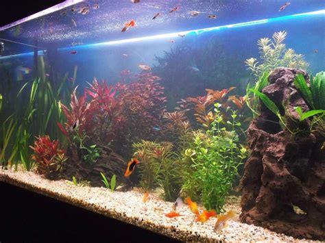 feng shui aquarium placement  design lovetoknow