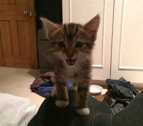 ed sheeran cats ed sheeran and graham the cat critters pinterest