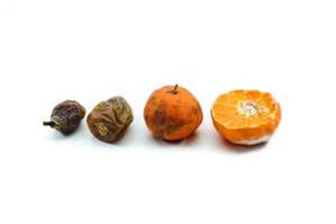 micotossine negli alimenti micotossine nel piatto gruppo maurizi