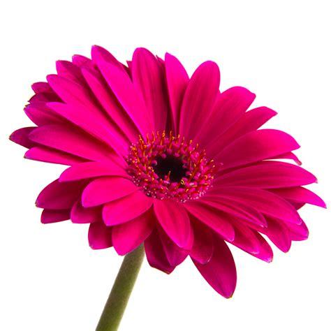 Image result for flower