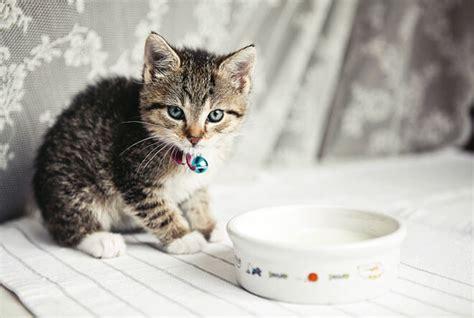 gattini alimentazione svezzamento dei gatti come svezzare un gattino latte e