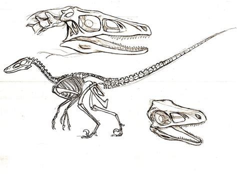 velociraptor study by telera1701 on deviantart