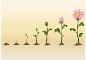 growing flower vectors download free vector art stock graphics images