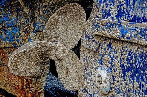 what are barnacles on a boat barnacle on boat www pixshark images galleries