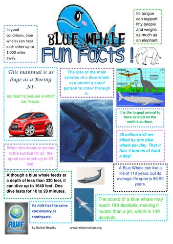 new year facts ks1 blue whale facts by edbentham teaching resources tes