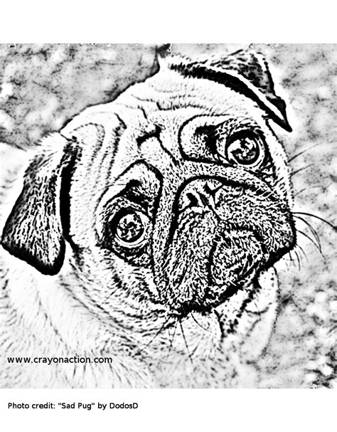 pug color free coloring pages of pug dogs