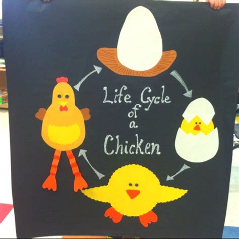 life cycle of a chicken photo cut out best 25 bird life cycle ideas on pinterest whole wild