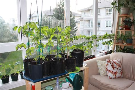 indoor garden apartment design ideas  small space