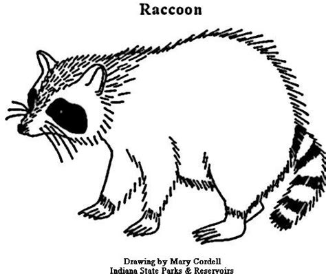 raccoon coloring pages kindergarten raccoon coloring page sew what pinterest raccoons