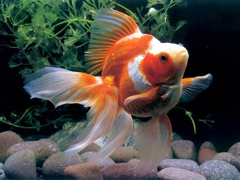 3d wallpaper water fish beautiful fishes wallpaper pictures sea water animals