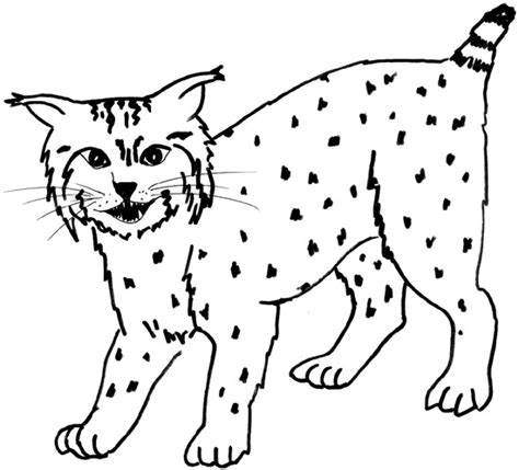 bobcat coloring page read across texas 2002 texas reading club chapter