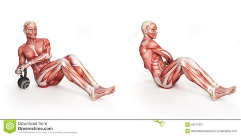 kettlebell swing anatomy russian twist stock illustration illustration of biology