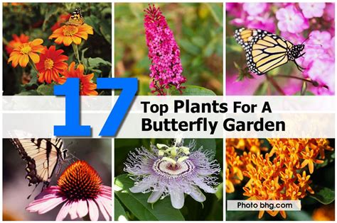 Flowers For A Butterfly Garden 17 Top Plants For A Butterfly Garden