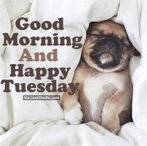 good morning  happy tuesday pictures