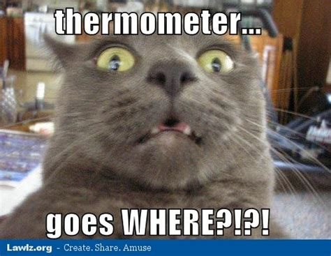 Sick Cat Meme - funny memes about being sick foto artis candydoll