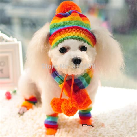 beanies for dogs winter pet puppy accessories for dogs pink yellow rainbow striped hats scarf socks