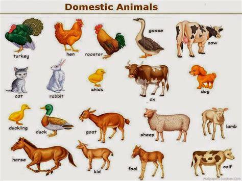 imagenes animales varios im 225 genes de todo tipo de animales banco de im 225 genes gratis
