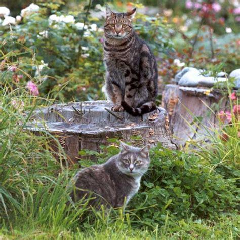 cat garden cats in the path garden