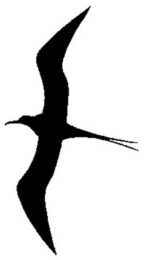 drawings of a sea bird clipart best drawings of a sea bird clipart best
