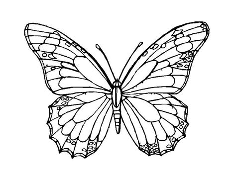 mosaic butterfly coloring pages butterfly mosaic coloring pages kate funchion