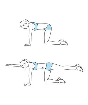 bird dogs workout move 1 bird get stronger abs in 15 minutes real simple