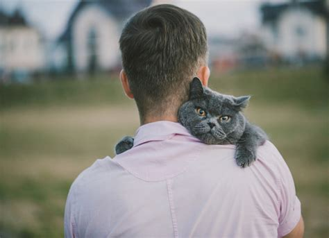 study shows  cats  dogs  people cope  social rejection petmd