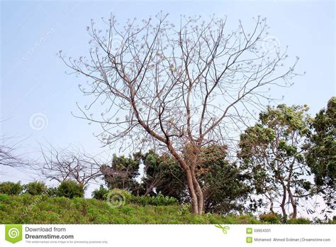 what do trees represent beauty of nature stock photo image 59954331