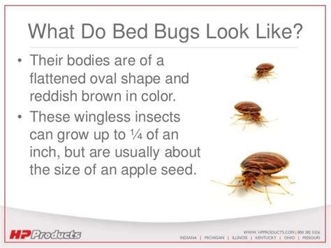 bed bugs prevention bed bug prevention playbook