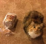 12 Cats That Might Actually Be Loaves Of Bread  3MillionDogs