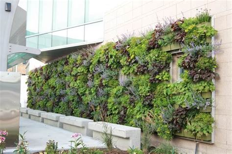 finished living wall with rear feed irrigation
