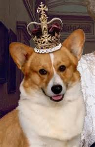 the queen s corgis why the king of the corgis bit the dust eight things you