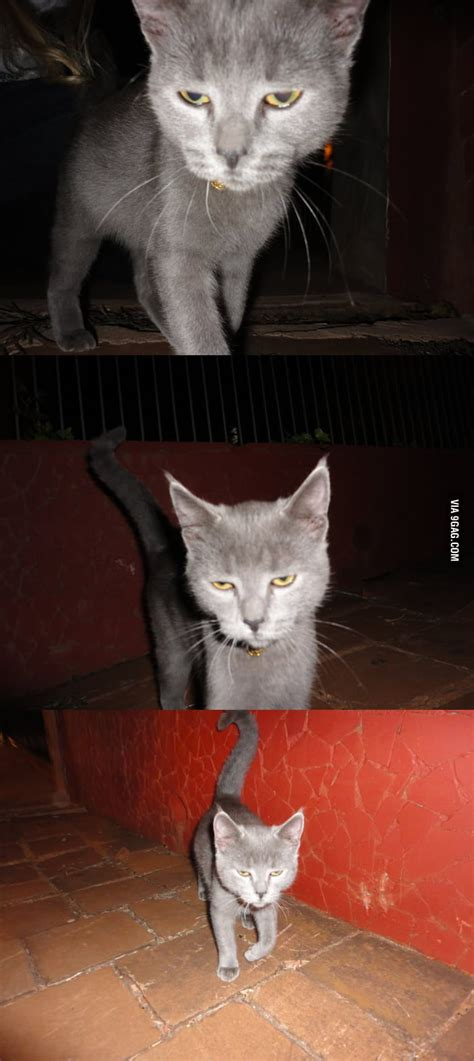 Unamused Cat Meme - unamused cat is unamused 9gag