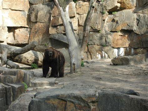 zoologischer garten oder tierpark berlin zoologischer garten und tierpark friedrichsfelde