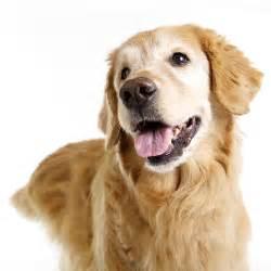 Dog Senior Dog Care Canine Care Akaal Pet Hospital