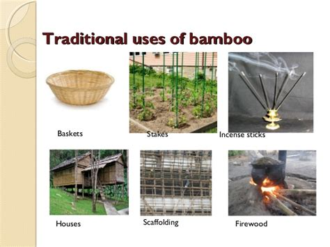 uses for bamboo its uses
