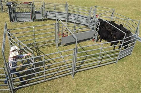 how to a working for cattle ww livestock alleys tubs cattle handling equipment