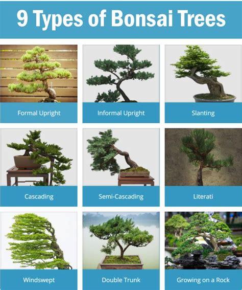 Bonsai Baum Arten by 25 Best Ideas About Types Of Bonsai Trees On