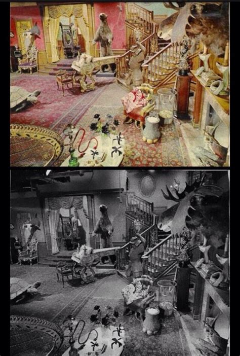 the family actual set in color stuff thats cool