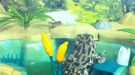 backyard safari tadpole habitat image mag