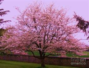 blossoming almond tree painting by eric schiabor