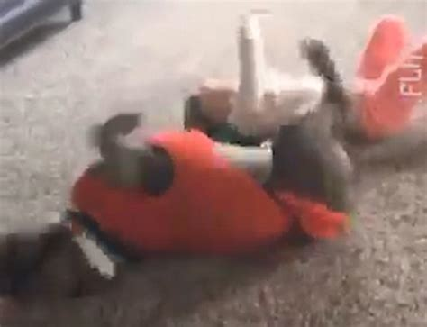 why did the rug roll around his shows a rescue pit bull try to copy a s cartwheel daily mail