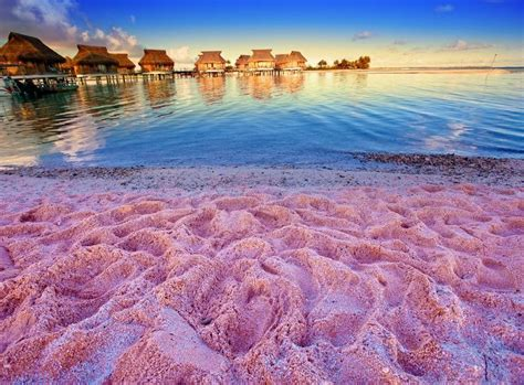 beaches with pink sand 25 best ideas about bahamas island on pink