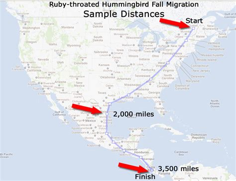 fall migration distances ruby throated hummingbird