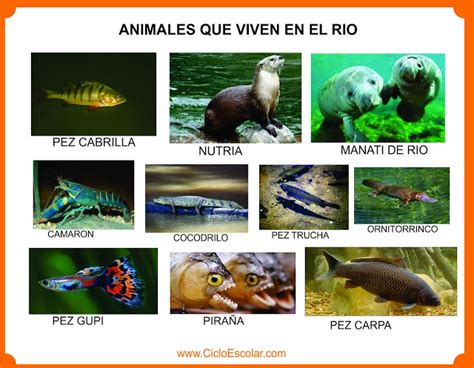 imagenes animales que viven en el bosque dibujos para colorear de animales que viven en el agua