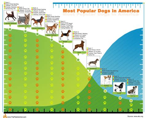most popular breed top10 most popular dogs in america visual ly