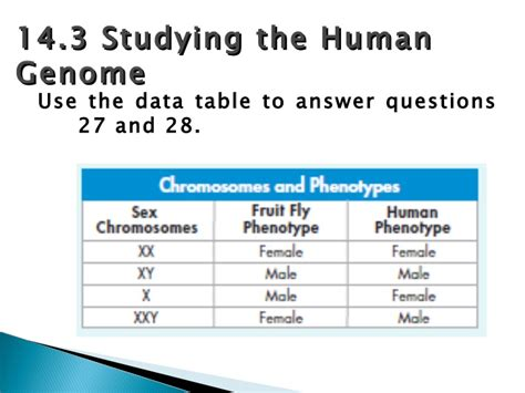 chapter 14 the human genome section review 14 1 chapter 14 assessment review