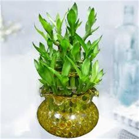 feng shui bamboo plant in bedroom feng shui live plants in bedroom home delightful