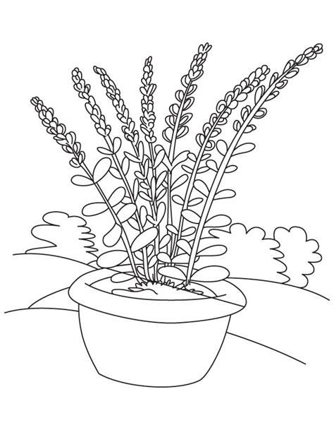 lavender flower coloring page lavender flower pot coloring page download free lavender